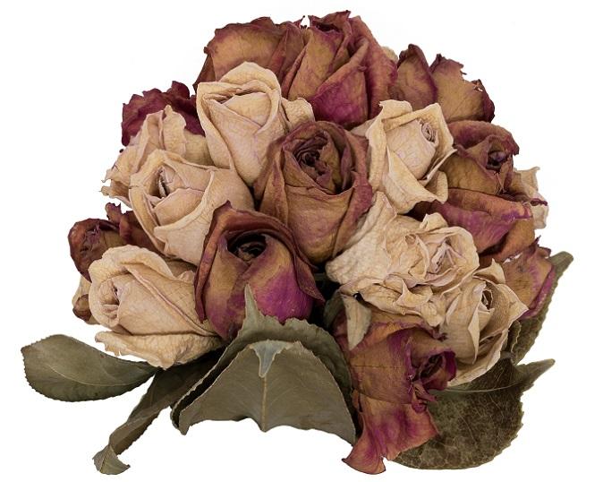 Einmal getrocknet kann er an einem besonderen Platz aufgestellt und für die Ewigkeit geliebt und bewundert werden. (#11)