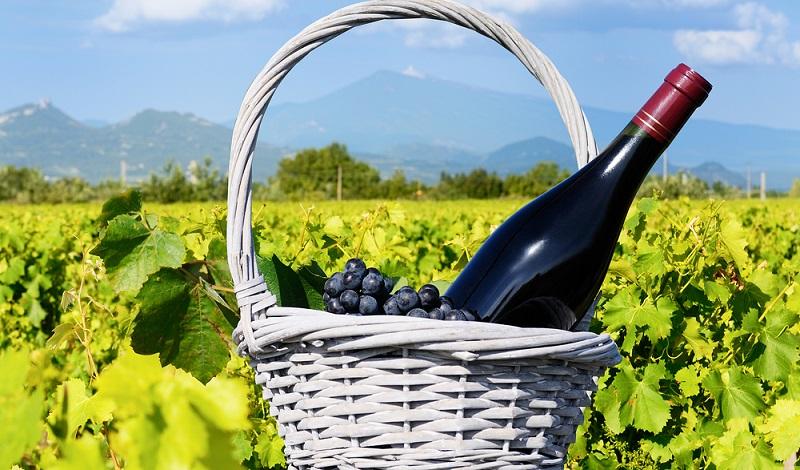 """Ein sehr beliebtes Produkt ist der """"Côtes du Ventoux rouge Grange des Dames"""", dessen Trauben an den südlichen Hängen des Mont Ventoux angebaut werden. (#02)"""