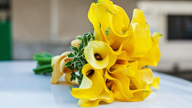 Es spricht viel dafür, bei der Hochzeit einen Strauß mit weißen oder bunten Callas zu nutzen. Die eleganten Blüten passen gut zu jeder Brautmode. (#07)