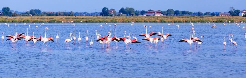 In den Gewässern der ehemaligen Salinen von Cervia leben heute weit über 2.000 Flamingos und über 100 - teils seltene - Vogelarten. Auch wenn die Salinen heute nicht mehr zur Herstellung von Salz genutzt werden, bieten sie doch den Lebewesen der Natur Schutz und Unterkunft. (#1)