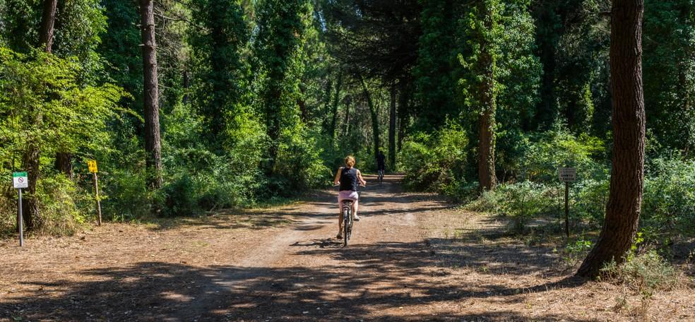 Der Pinienwald von Cervia ist an manchen Stellen über 1.000 Jahre alt - sagt man. Das Thermalbad liegt in diesem Kraftort und man kann die Kräfte spüren, die von Wald und Thermalbad ausgehen. (#1)