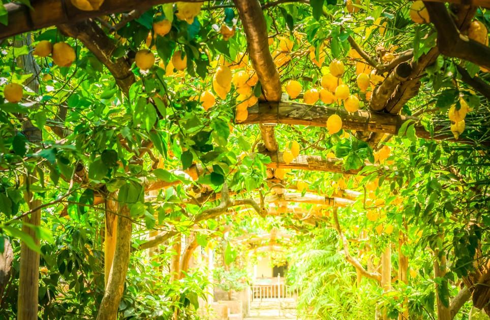 """""""I Giardini di Cataldo"""" - ein wunderbarer Ort zum Verweilen und Träumen an der Amalfiküste in Sorrento. Zentral gelegen, sind die Gärten nicht weit von der Accomodation Amalfi. (#1)"""