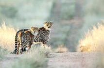 Jagen in Namibia: Honeymoon im Naturreservat
