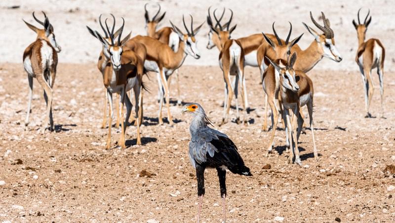 Die NAPHA (Namibia Professional Hunting Association) sorgt mit strengen Auflagen dafür, dass angewandter Naturschutz und nachhaltige Trophäenjagd in Einklang gebrachte werden.