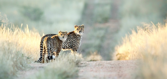 Jagen in Namibia: Honeymoon im Naturreservat
