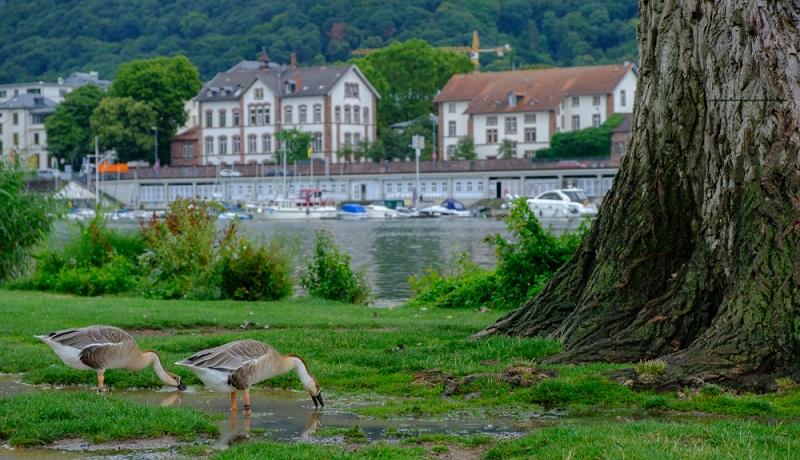 Wer es romantisch mag, muss unbedingt die Neckarwiese mit dem oder der Liebsten besuchen.