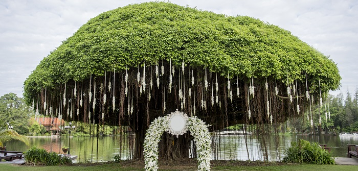 Grüne Hochzeit: Grün heiraten ist in! ( Foto: Shutterstock- Jaengpeng )